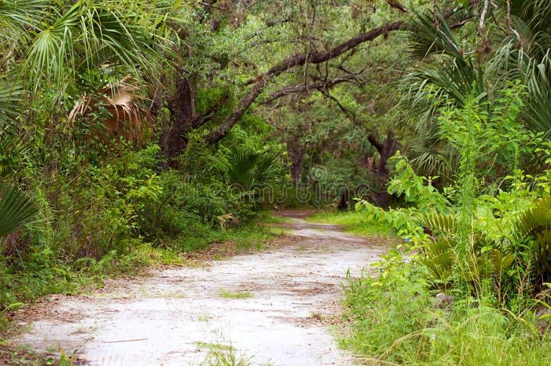 自然道路在佛罗里达原野 库存照片