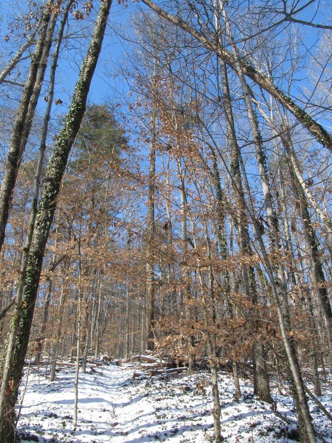 自然道路在冬天 免版税库存照片