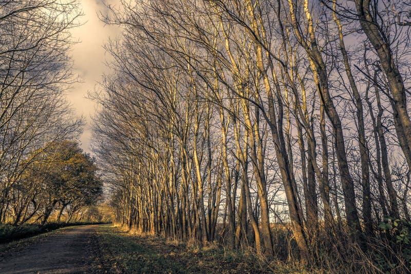 自然道路在秋天的一个黑暗的森林里 库存图片