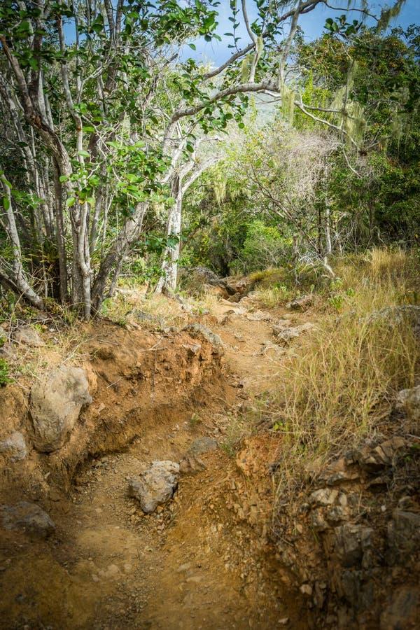 自然道路-库拉索岛景色 免版税图库摄影
