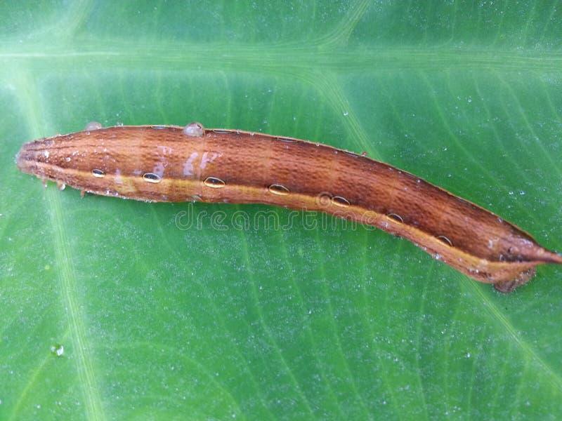 自然野生蠕虫 图库摄影