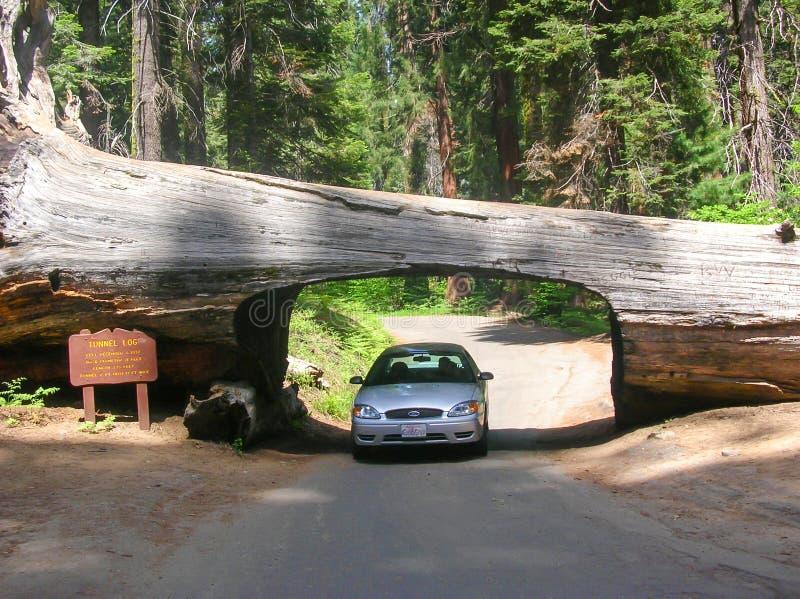 自然隧道 库存照片