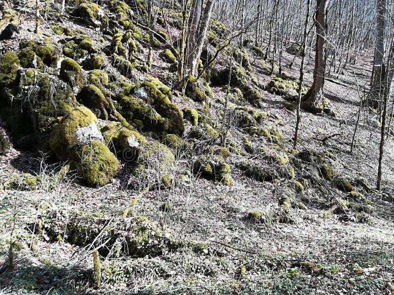 自然青苔草和太阳颜色 库存图片