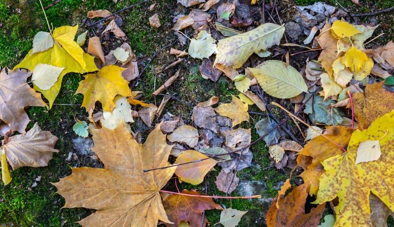 自然静物画,与青苔的秋叶 免版税库存照片