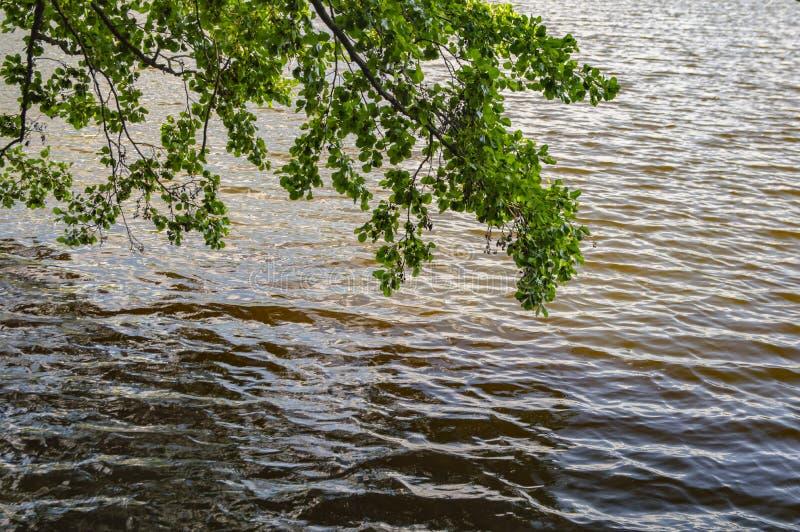 自然风景-垂悬在水上的树枝 图库摄影