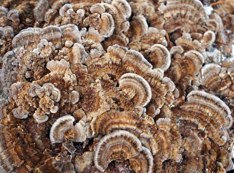 自然,真菌纹理  免版税图库摄影