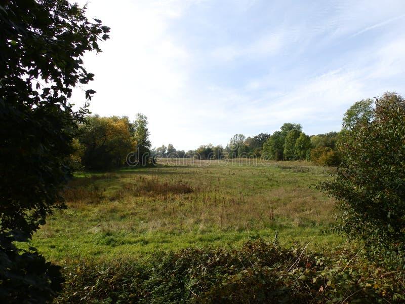 自然,草甸,风景在德国 库存照片