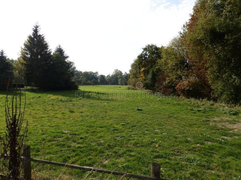 自然,草甸,风景在德国2 免版税图库摄影