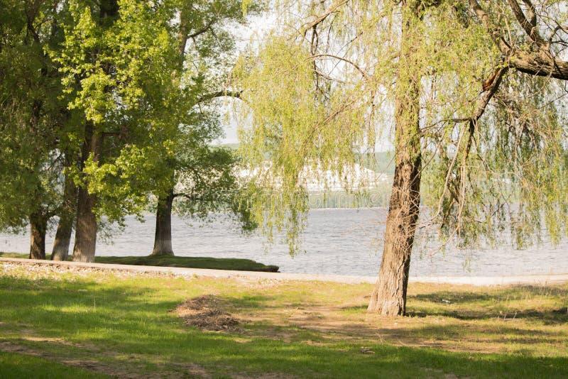 自然:树、绿草和河 免版税库存照片
