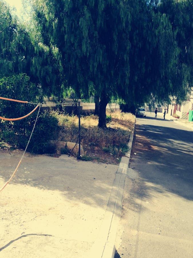 自然 后院 街道 城市 设计 免版税库存照片