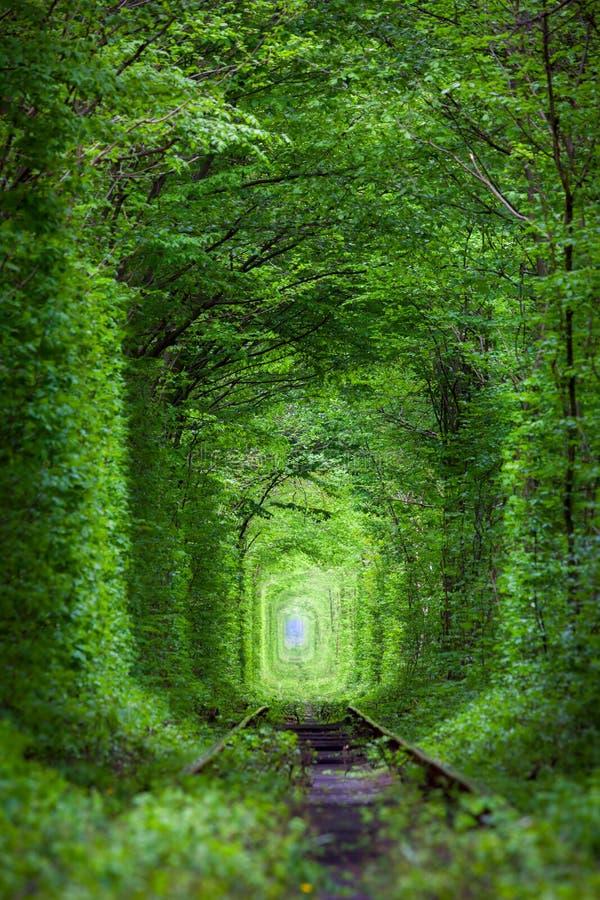自然-真正的隧道爱,绿色树奇迹  库存图片