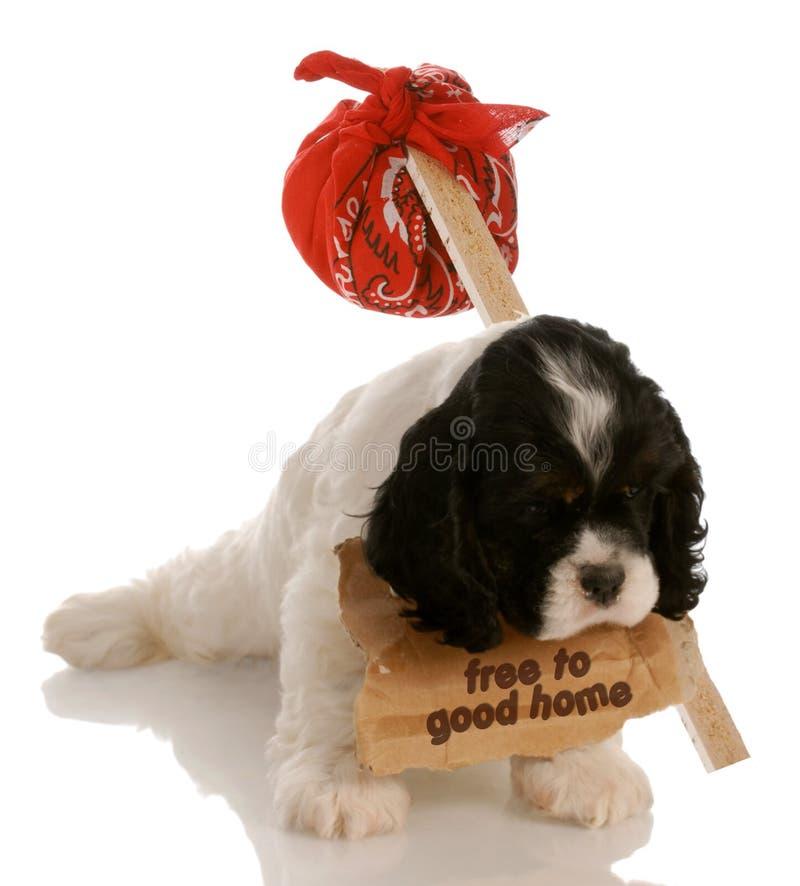 自由小狗 免版税库存图片
