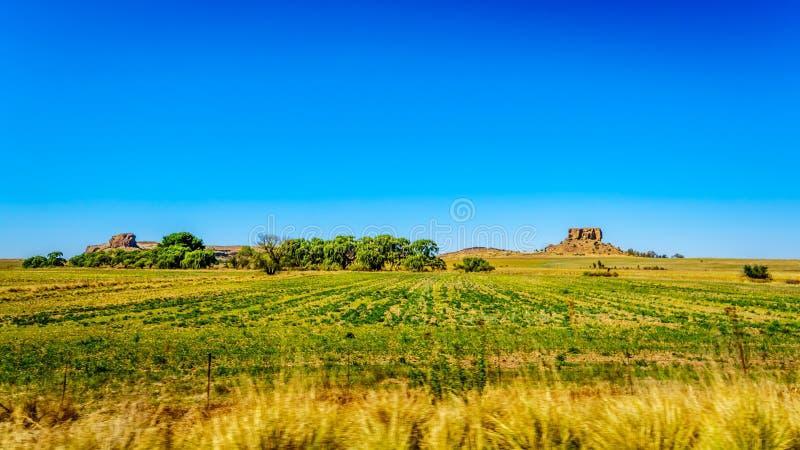 自由州省的肥沃的农地在南非 图库摄影