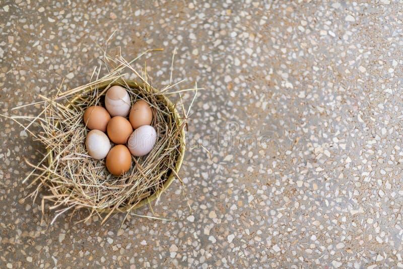 自由放养的有机鸡鸡蛋巢  免版税库存图片