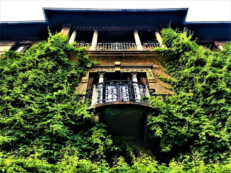 自由样式宫殿在都灵,山麓地区,意大利 常春藤、自然、建筑学、艺术和历史 免版税库存照片