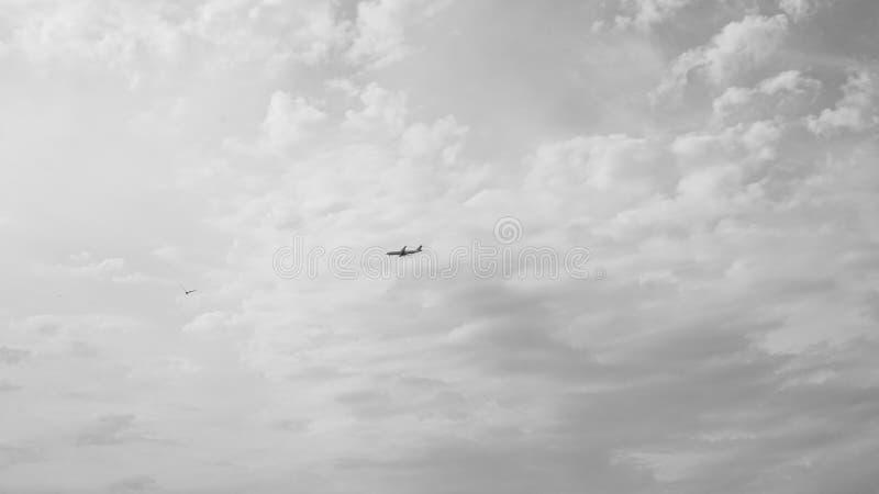 自由的飞行 免版税库存照片