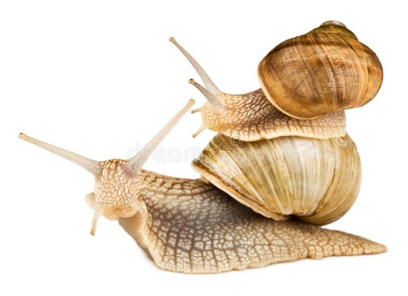 自由蜗牛乘驾 免版税库存照片