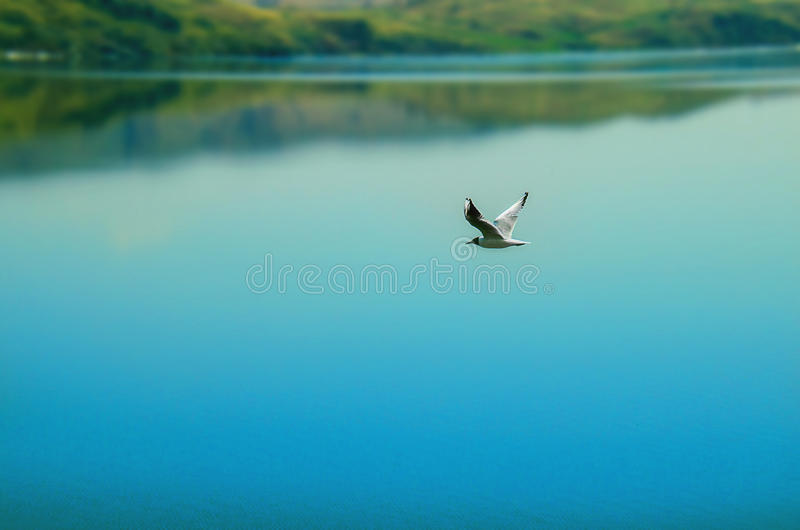 自由飞行鸟 库存图片