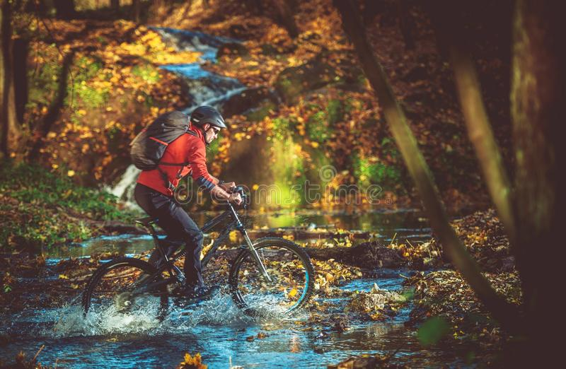 自行车乘驾在森林里 库存图片
