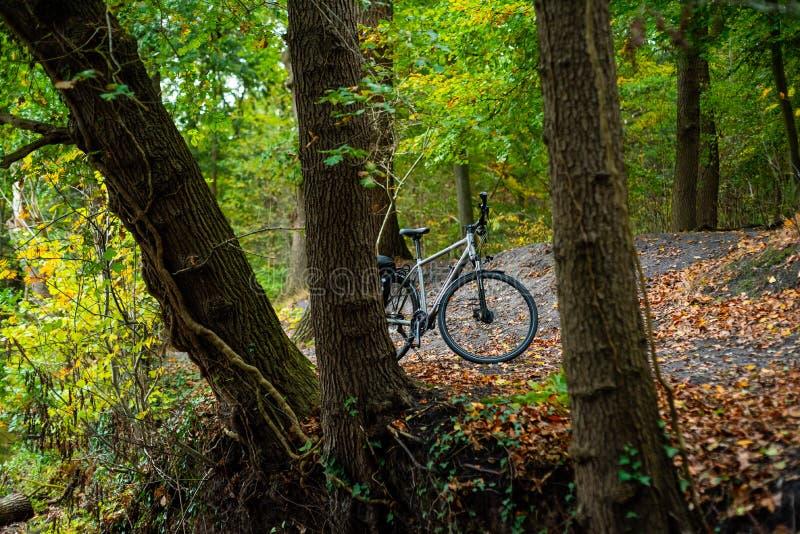 自行车作为在这些照片的主要题材 免版税库存照片