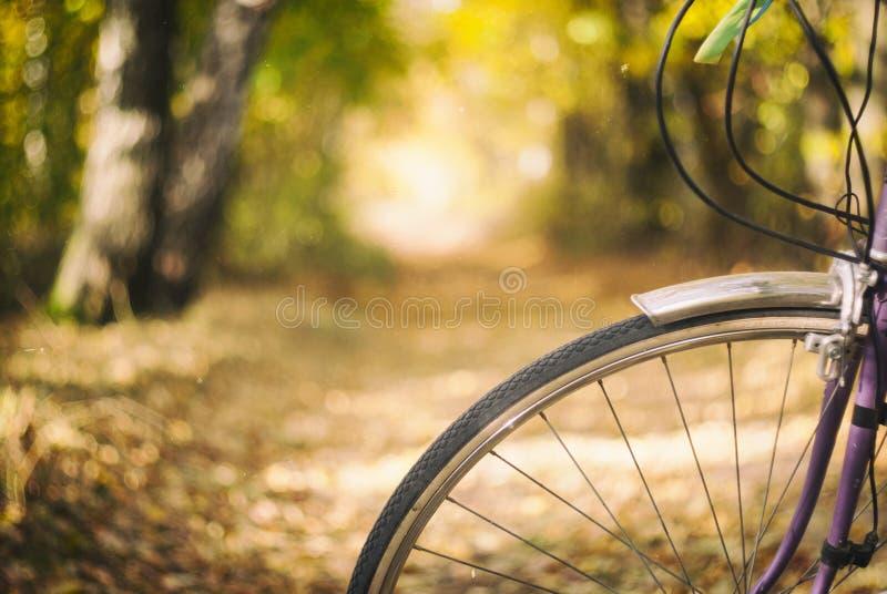自行车和秋天 库存照片
