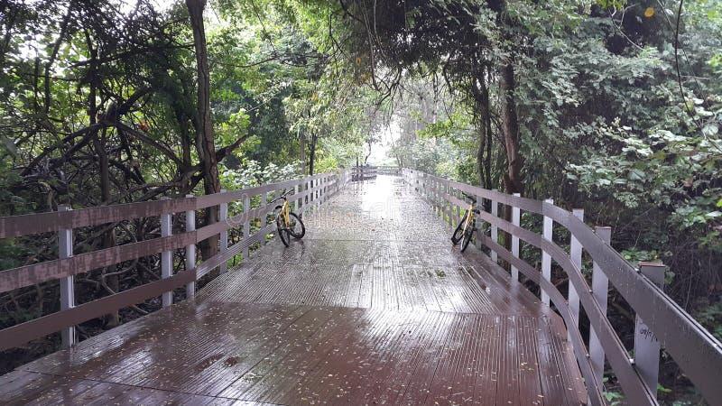自行车在森林里 免版税库存图片