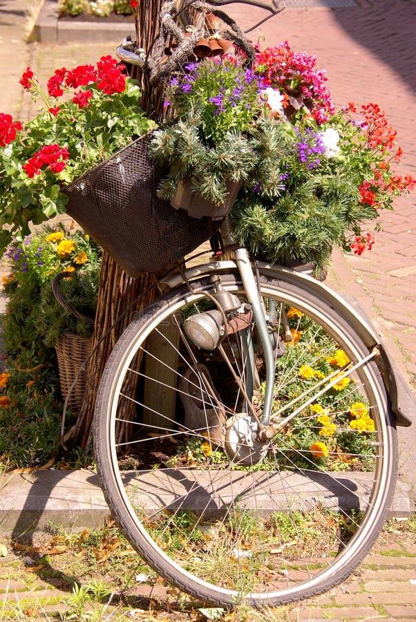 自行车夏天 库存照片