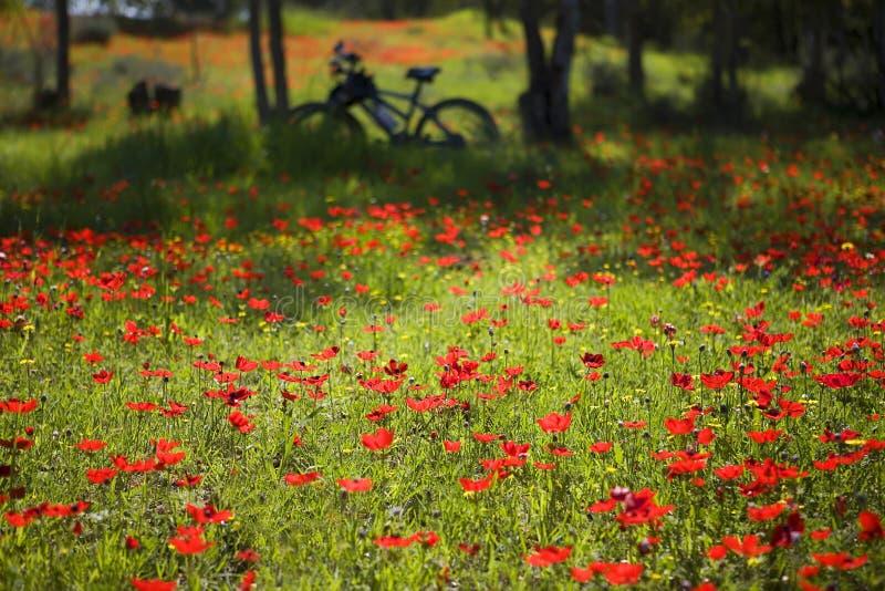 自行车春天行程 库存照片
