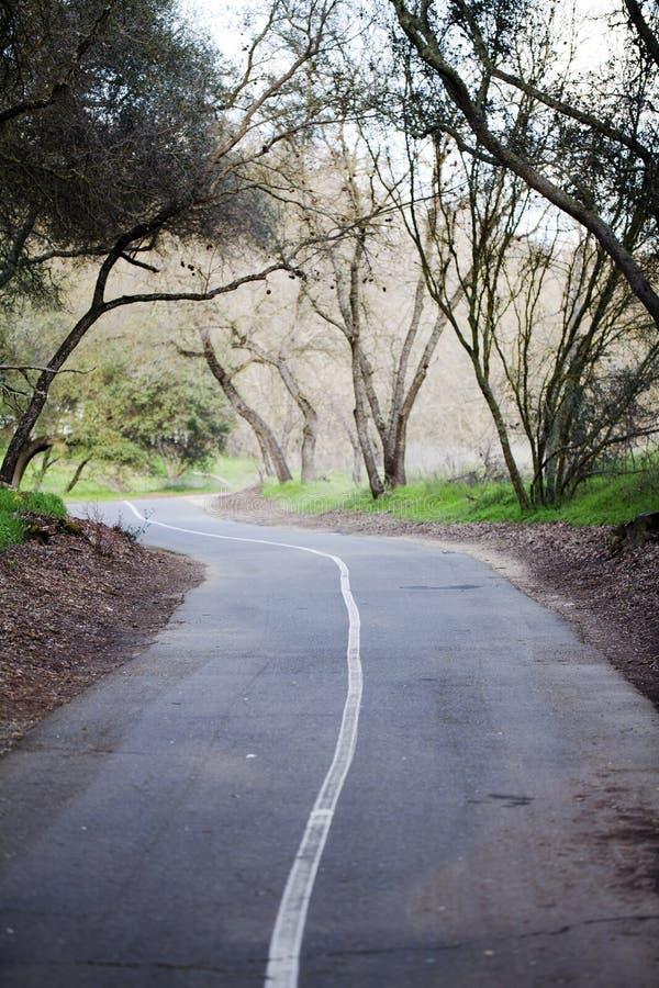 自行车空导致线索结构树 库存图片