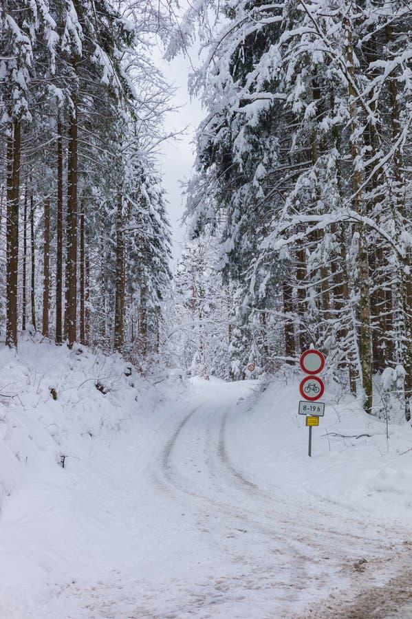自行车车道在forrest的冬天 免版税库存图片