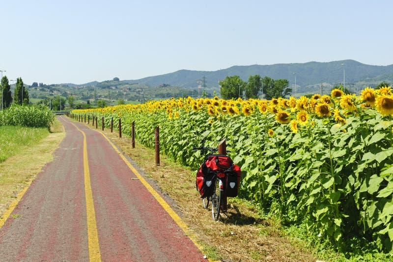 自行车道向日葵托斯卡纳 图库摄影