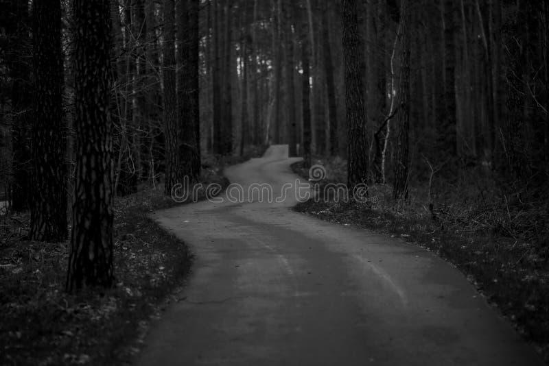 自行车道路在森林里 库存图片