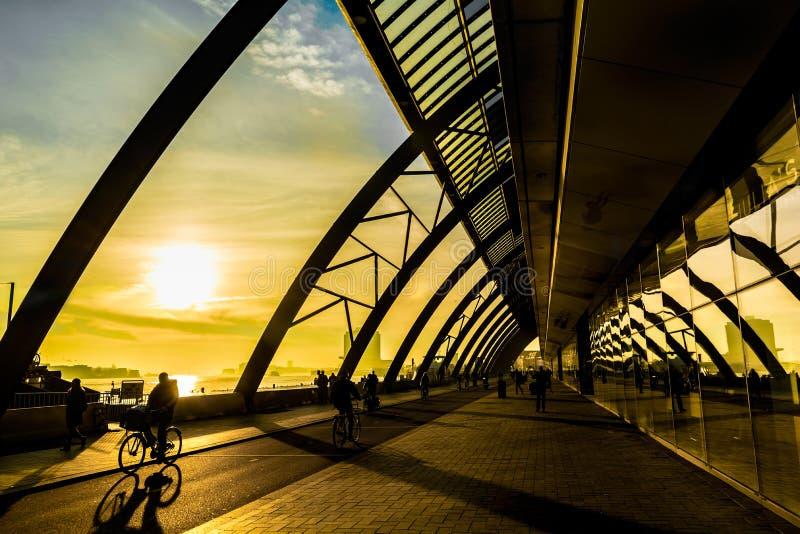 自行车骑士在阿姆斯特丹 库存照片