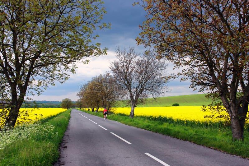 自行车骑士路农村斯洛伐克 库存图片
