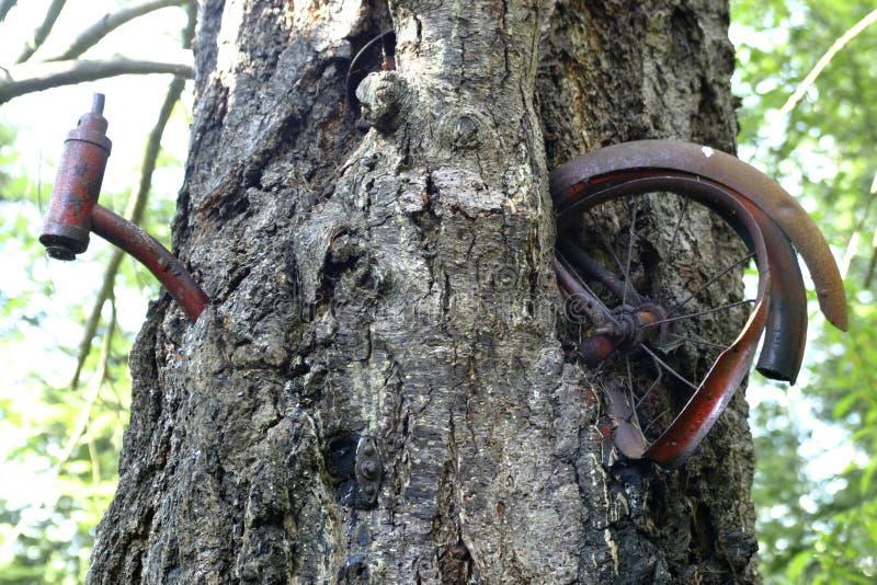 Download 自行车bizzare 库存照片. 图片 包括有 场面, 粗心大意, 结果, 骑自行车的人, 人力, 问题, 自然 - 283176