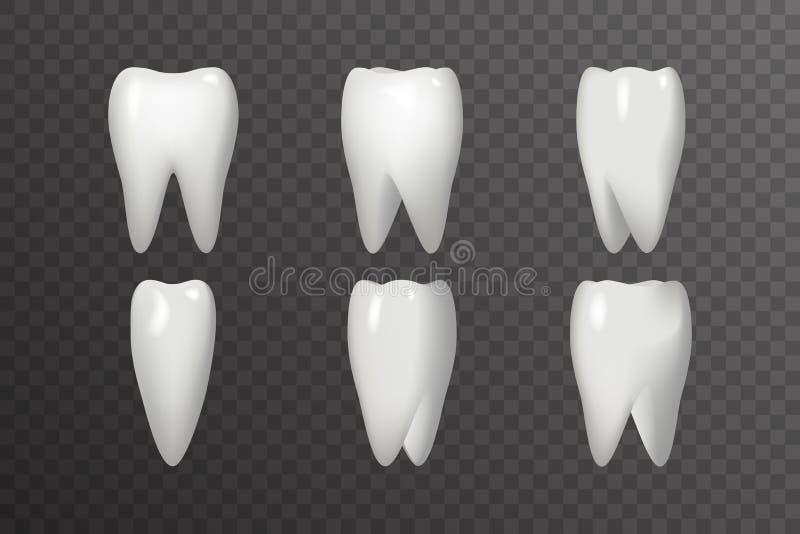 自转牙动画框架现实3d口腔医学牙齿海报设计象模板Transperent背景嘲笑 库存例证