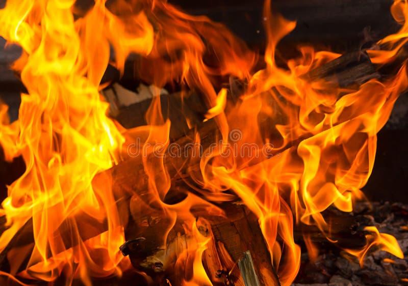 舌头发火焰背景力量元素绿色红色纹理夏天黑暗的背景篝火 免版税库存图片