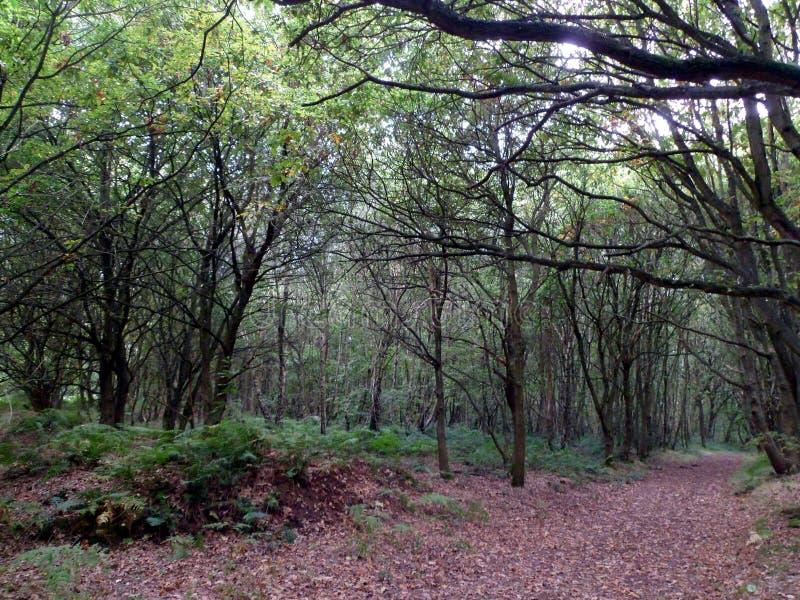 舍伍德森林风景 免版税图库摄影
