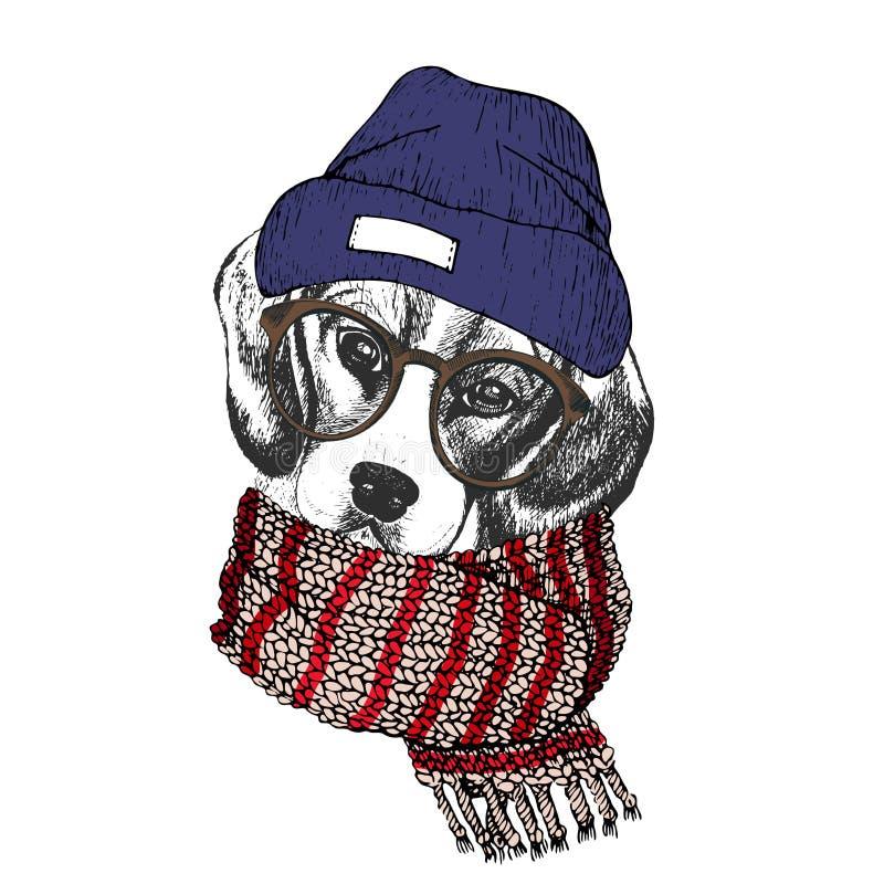 舒适冬天狗传染媒介手拉的画象  穿被编织的围巾, beanine andhipster玻璃的小猎犬 向量例证