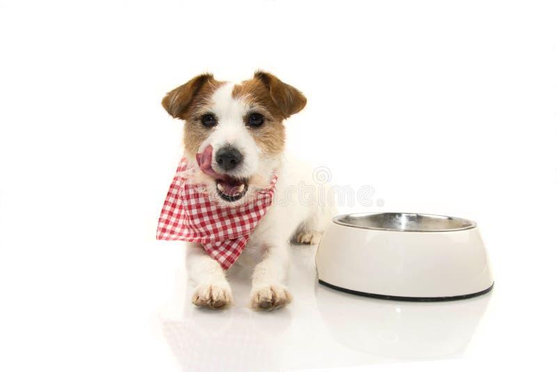 舔与舌头的狗以后吃 坐在一个空的碗旁边 被隔绝的演播室射击了反对白色背景 免版税库存照片