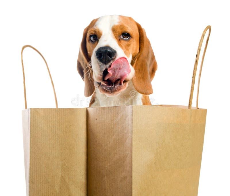 舔嘴唇的狗 免版税图库摄影