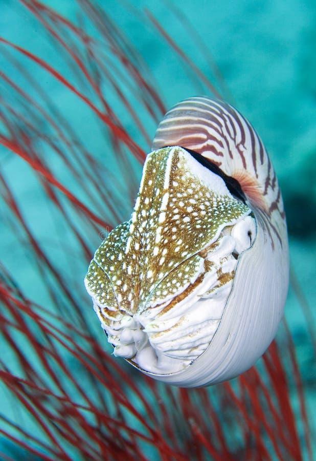 舡鱼壳 免版税库存图片