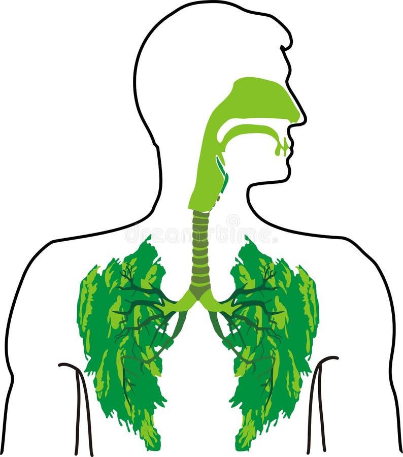 航空呼吸新鲜的清新的肺 库存例证