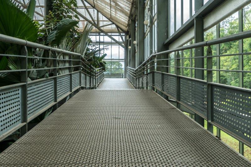 舷梯在温室植物中 免版税库存图片