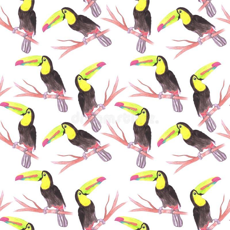 船骨开帐单的绘背景的Toucan或Ramphastidae sulfuratus鸟无缝的水彩鸟 向量例证
