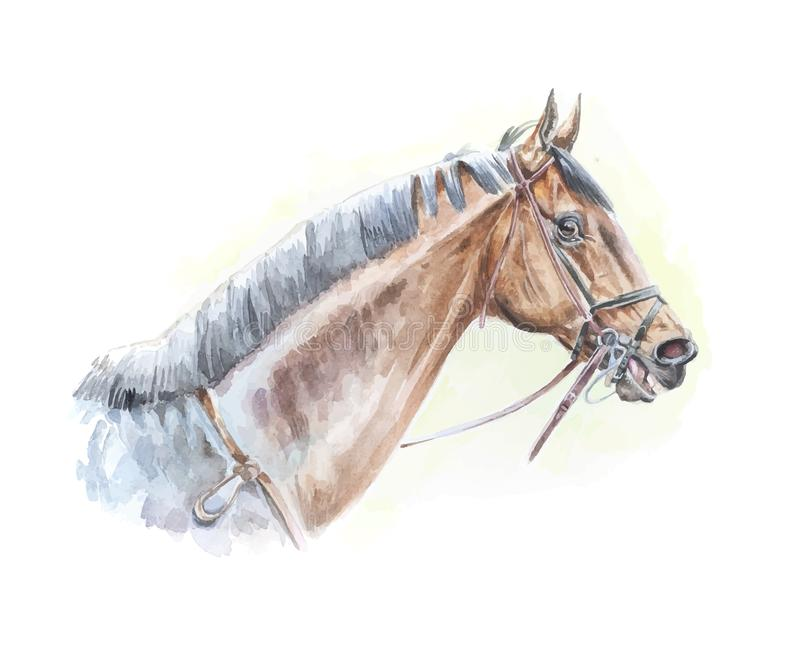 良种马水彩绘画画象以传染媒介格式 库存图片