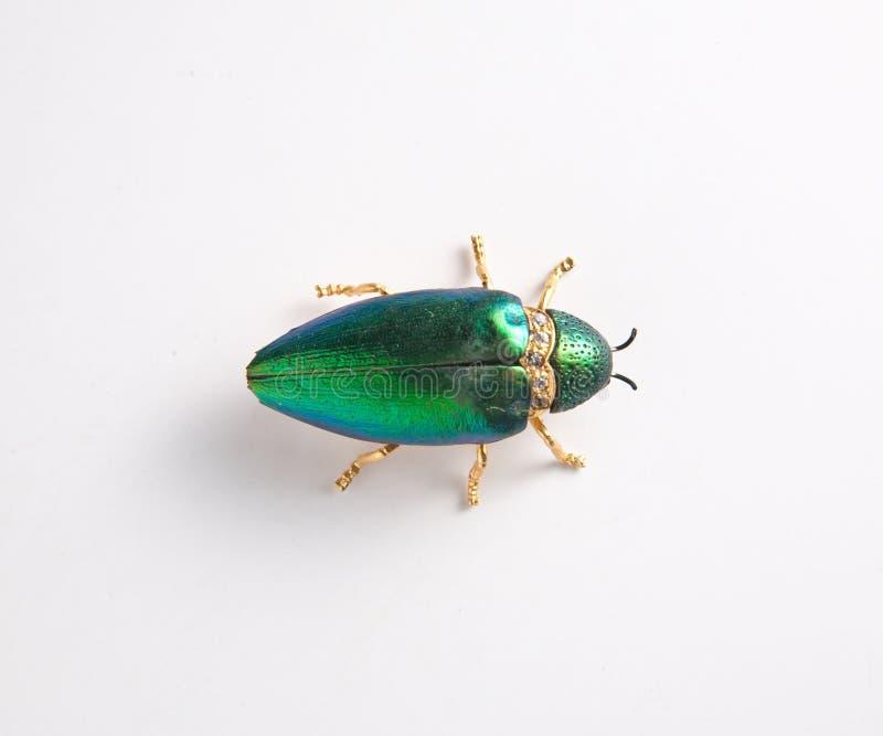 艰苦昆虫翼的红宝石颜色 免版税库存图片