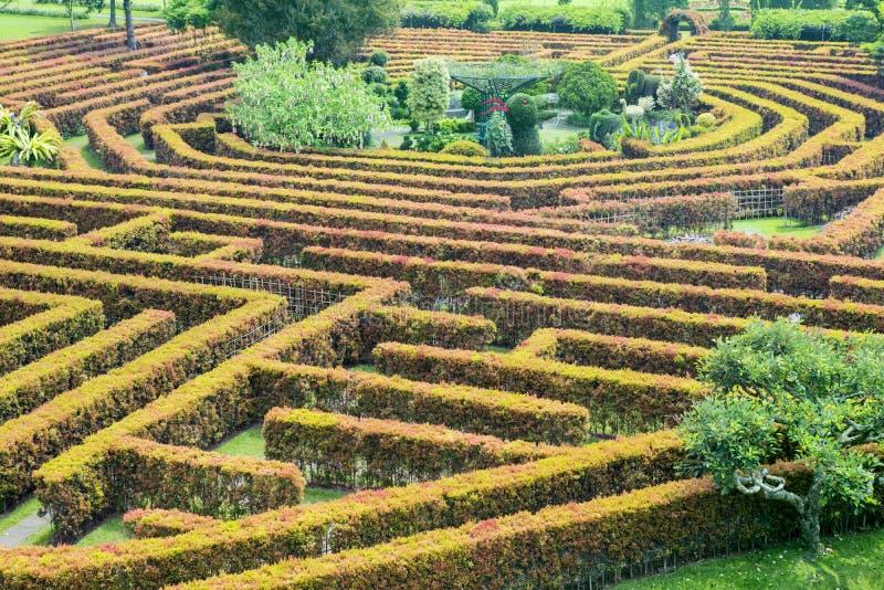 绿色丛生迷宫 库存照片