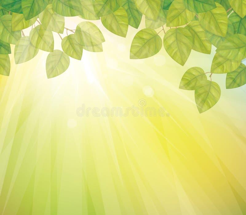 绿色传染媒介在晴朗的天空背景离开。 向量例证
