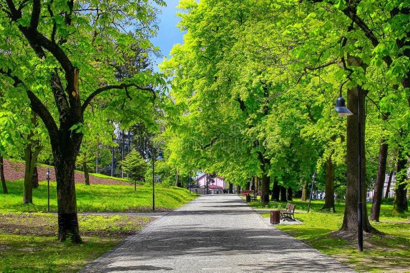 绿色公园胡同 库存图片